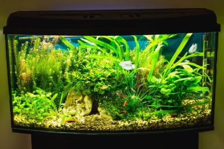 Planted Aquarium Lighting Calculator